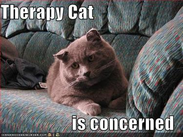 Cat_funnypicturestherapycat
