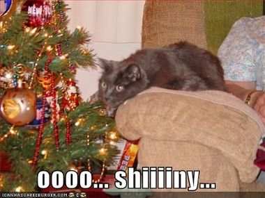 Holiday_funnypicturesshiny