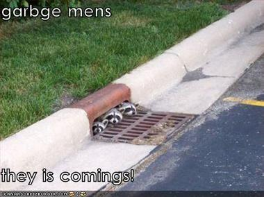 Y_standup_funnypicturesracoons