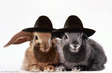 Cats_rabbis