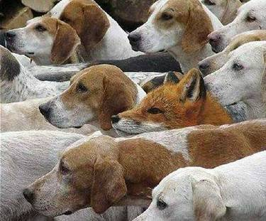 Dogs_foxdogs